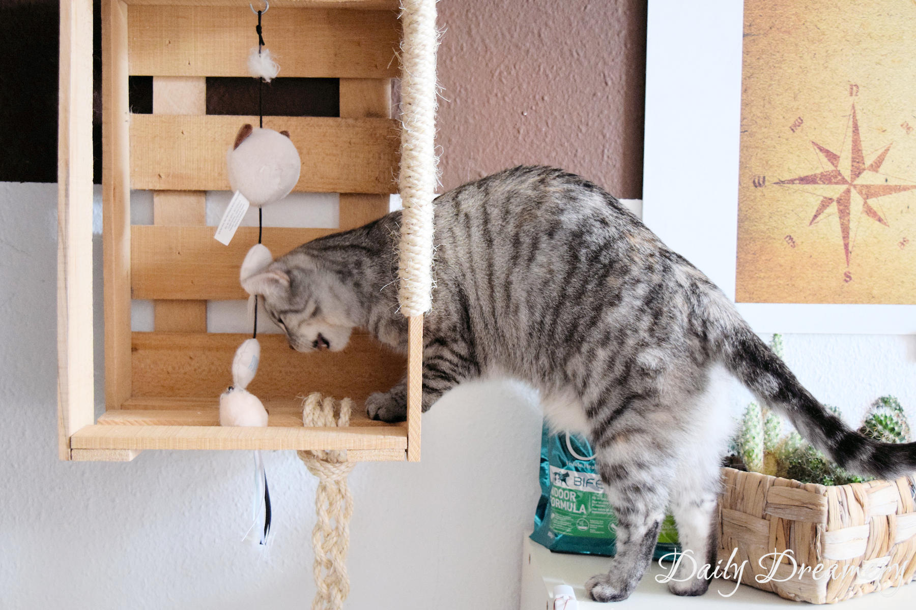 Bekannt DIY-Katzenspielzeug-Kletterwand-Wohnungskatzen-Purina-8 – Daily KR69